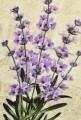 Covoras de baie, Chilai, Lavender DJT, bej/mov/verde